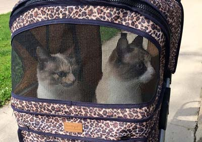 Two cats riding in a cat stroller with leopard print.