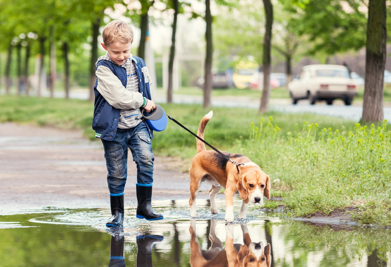 Boy with blue vest and rain boots walks beagle through puddle.